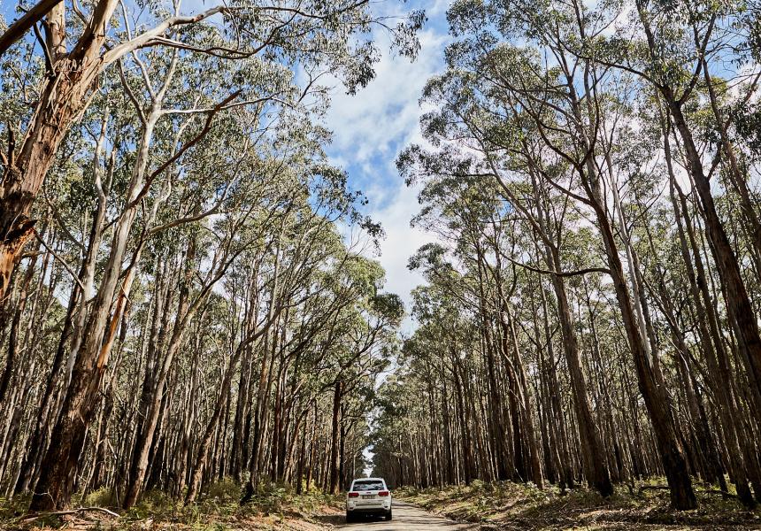 O'Brien's Road