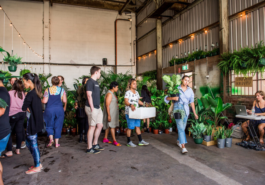 The Jungle Collective Plant Sale