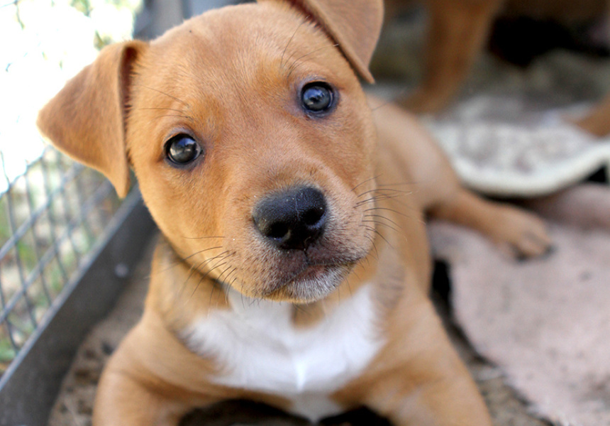 Now Is The Perfect Time To Adopt Or Foster A Pet Says Rspca Nsw