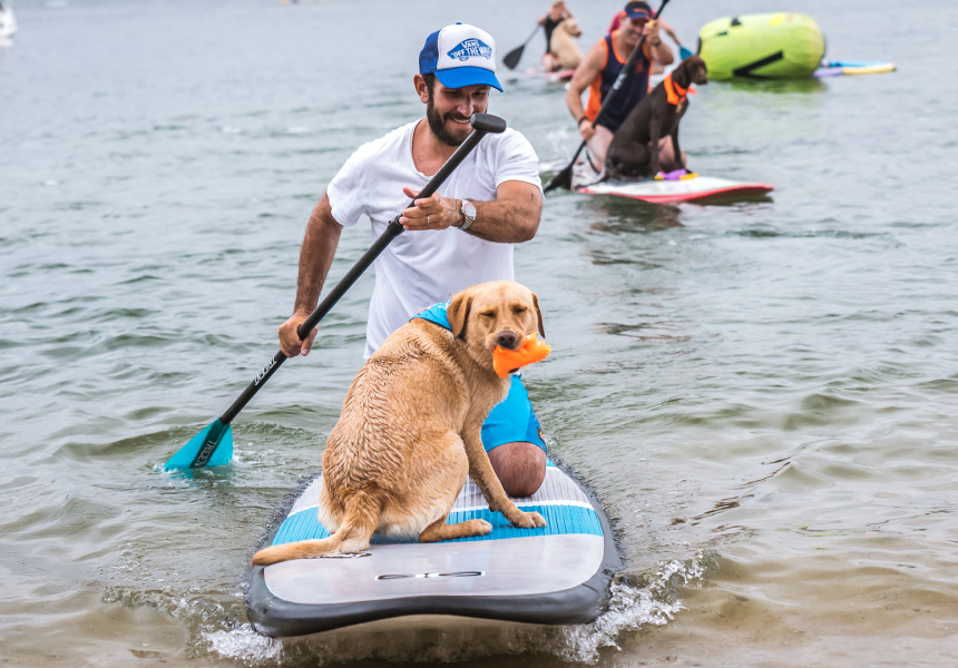 Every Man and His Dog Stand up Paddle