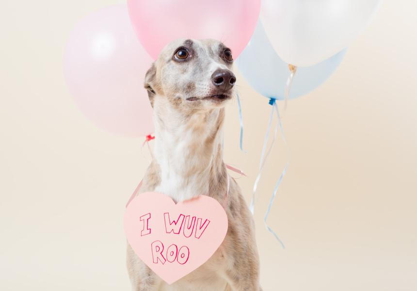 Dog Photog at The Good Copy