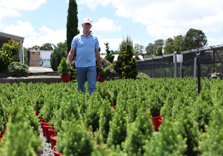 Where Christmas Trees Come From Broadsheet
