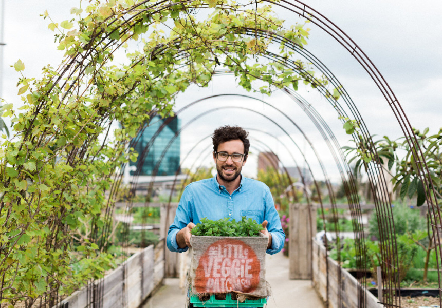 Mat Pember of the Little Veggie Patch Co.