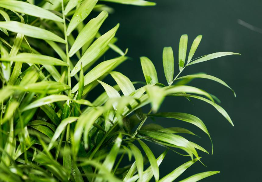 The Plant Society