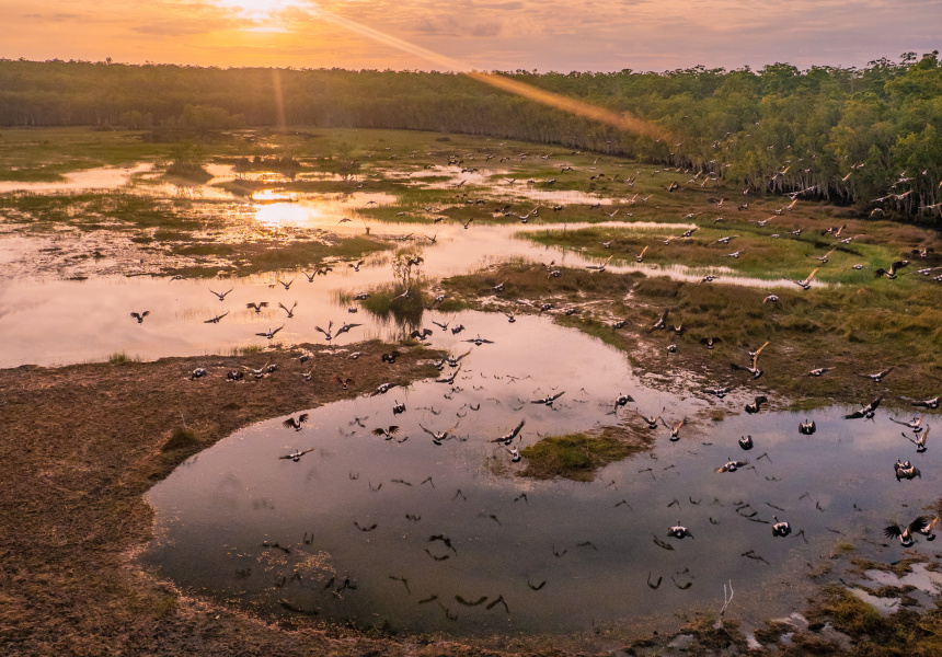 Wetlands near Tiwi Island Retreat