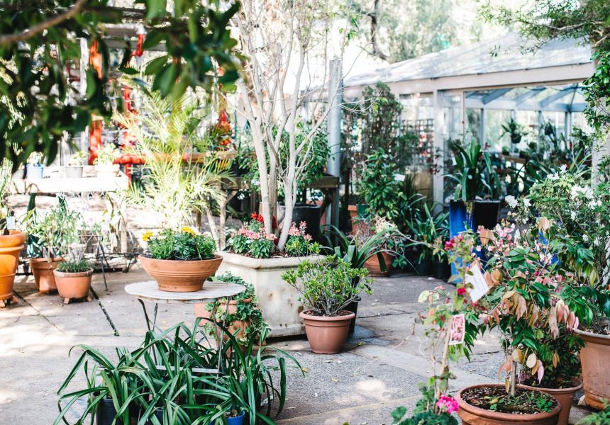 Saving Other Peoples Plants Broadsheet