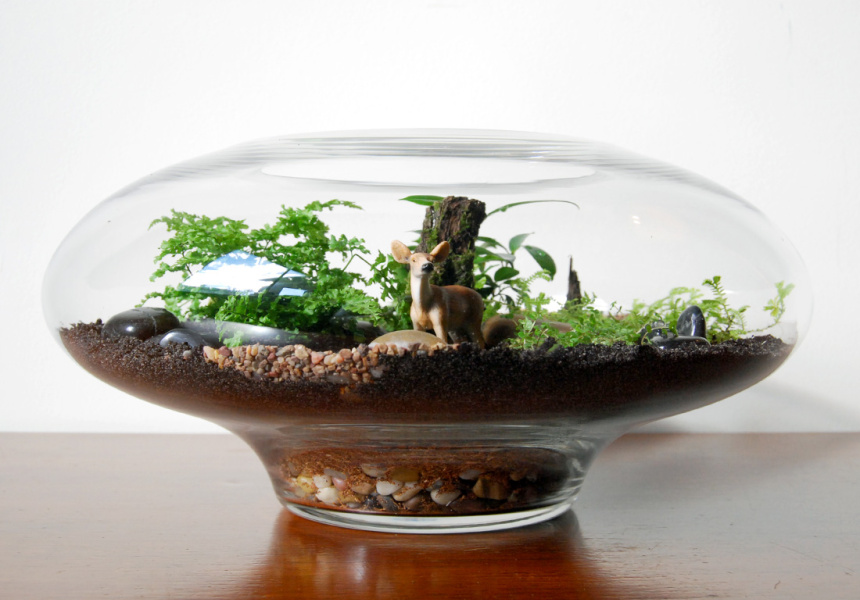 Making Terrariums With Bosky Broadsheet