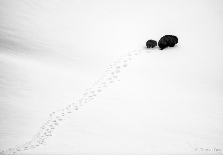 Big Step, Little Step by Charles Davis