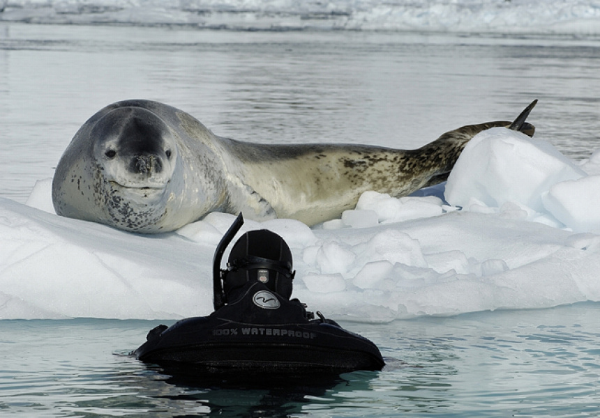 Paul Nicklen National Geographic Photographer Interview