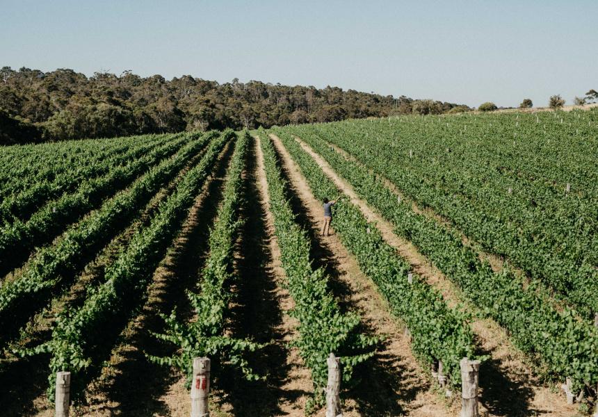 Las Vino winemaker Nic Peterkin
