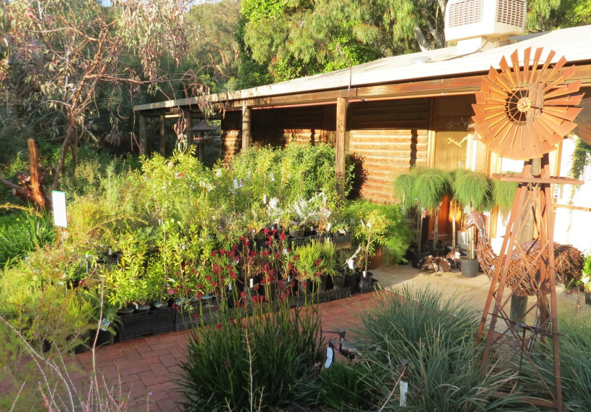 Best Nurseries And Plant Shops In Adelaide