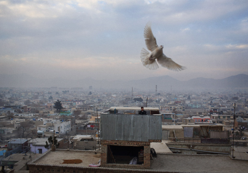 Flocks of pigeons are a common sight in the skies over cities across Afghanistan in the cooler months. Their keepers fly their flocks in circles above their roofs and attempt to confuse pigeons from other flocks into falling into their own at which point it becomes the property of its new master. For some men, a living is made by selling captured pigeons back to their original owners.
