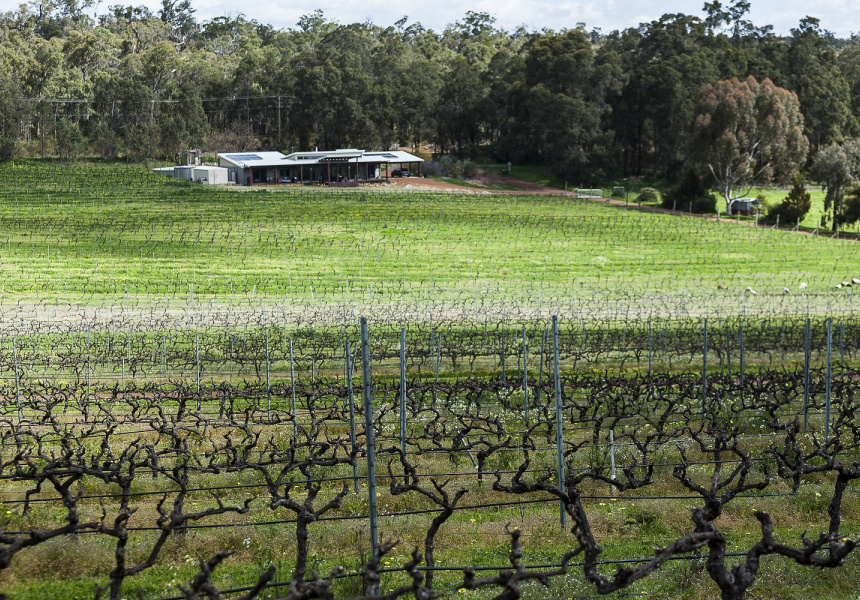 Vines at Hainault Winery.