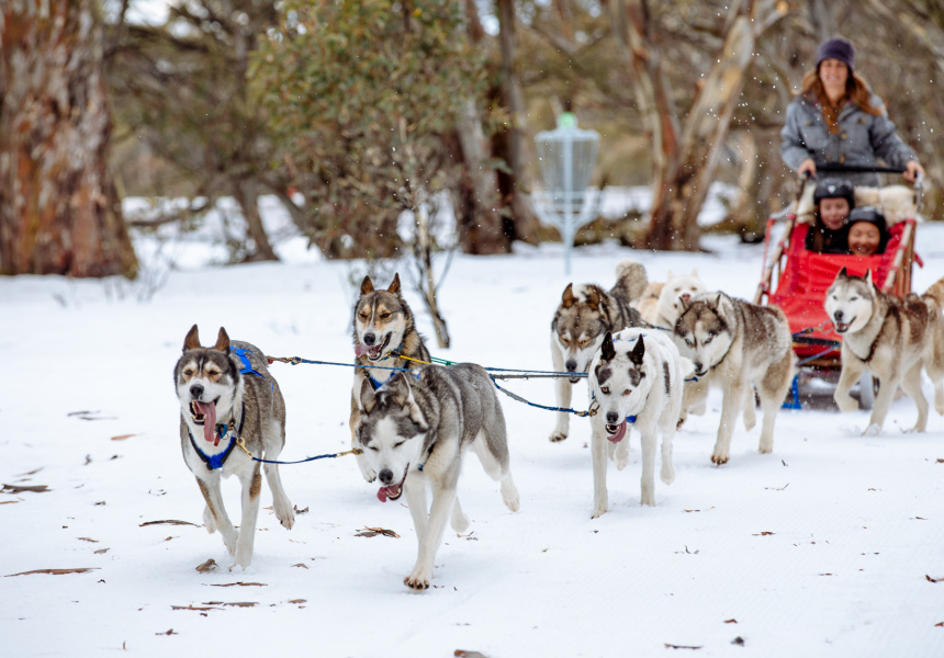 Australian Sled Dog Tours