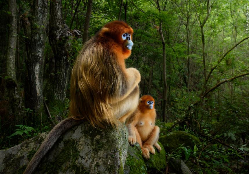 Wildlife Photographer of the Year: © Marsel van Oosten