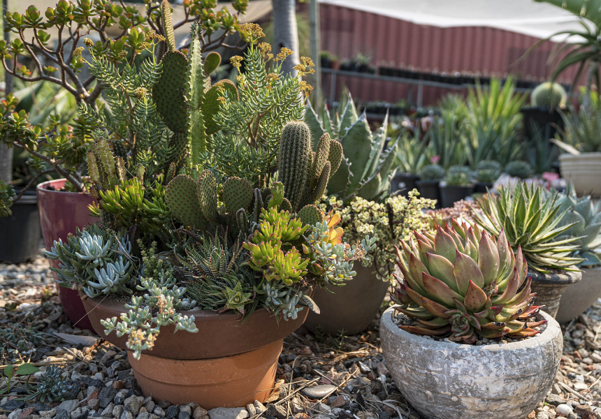 Rare Plants and Succulents Nursery