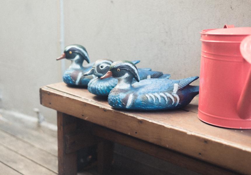 Three Blue Ducks, Bronte