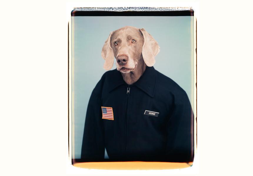 William Wegman  American born 1943 George, 1997 colour polaroid photograph  Collection of the artist