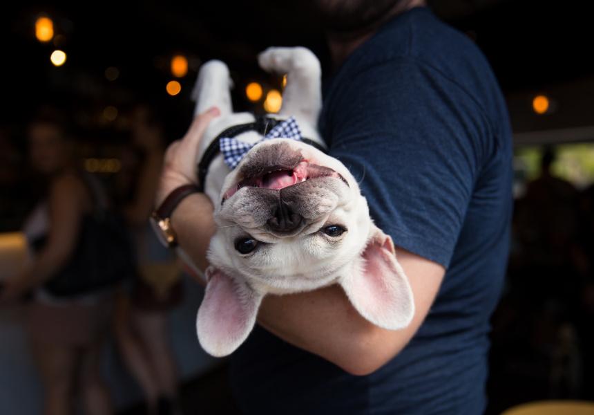 Adopt an RSPCA Pet for $29 - Broadsheet