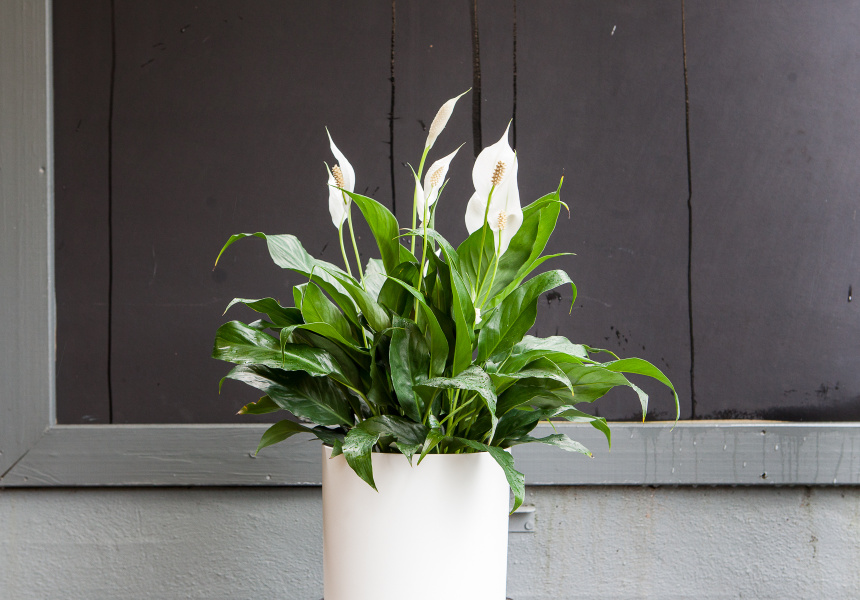 Guide to indoor plants for apartment living for Apartment design guide sepp 65