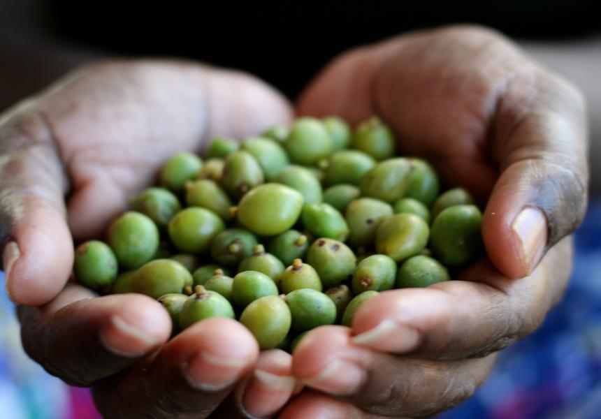 The kakadu plum
