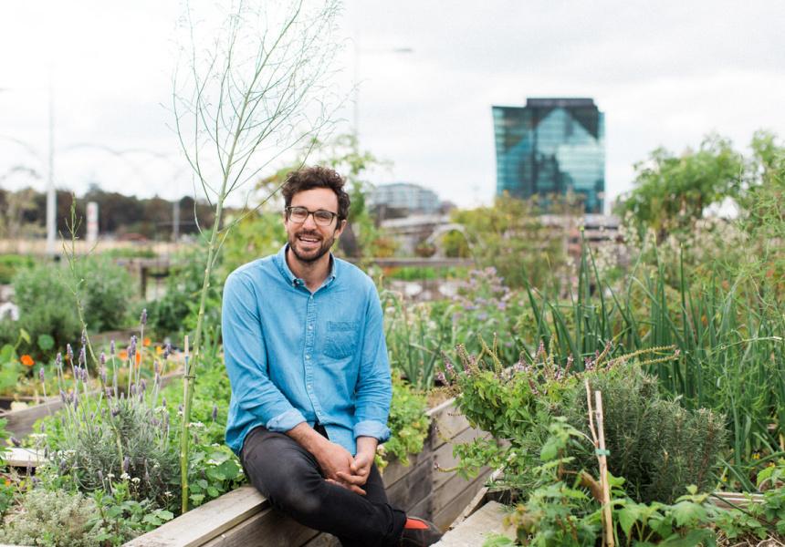 How To Finally Start That Veggie Garden Tips For Beginners
