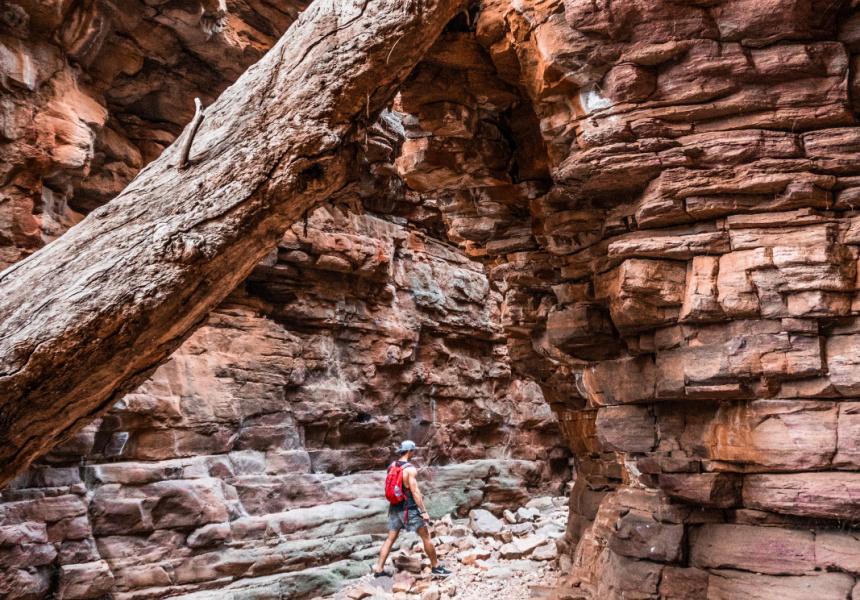 Mount Remarkable's Alligator Gorge