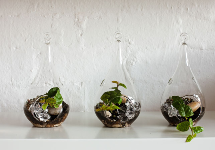 Photography by Sean Fennessy Styling by Lucy Feagins Mini Terraniums by Miniscapes