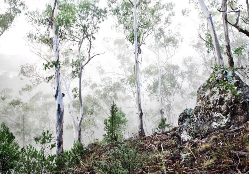 Mountain Mist by Caitlin Mills