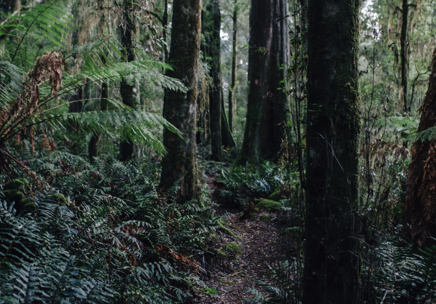 Tarkine Forest