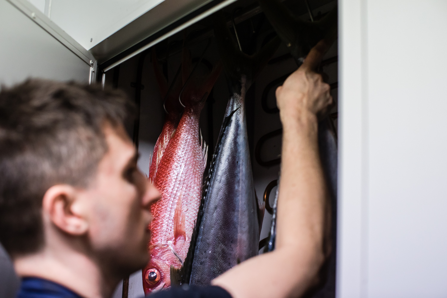 Niland in Saint Peter's fish-ageing fridge.