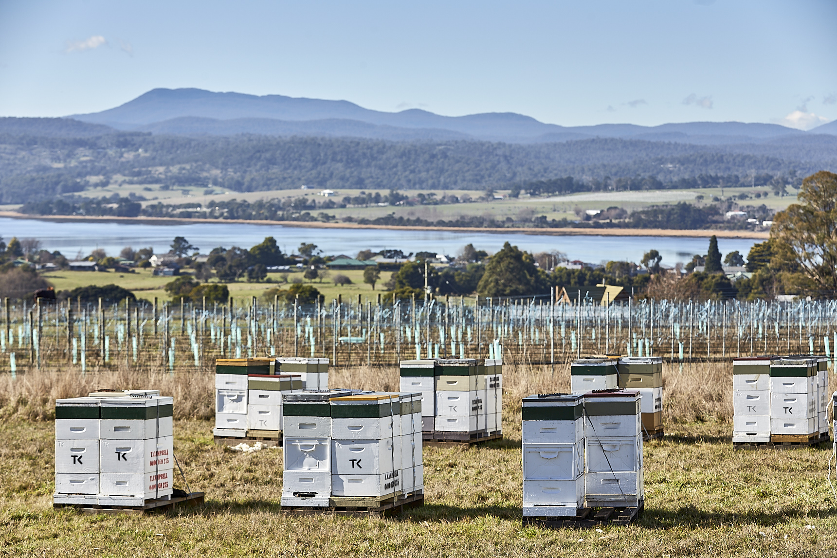 Honey Tasmania