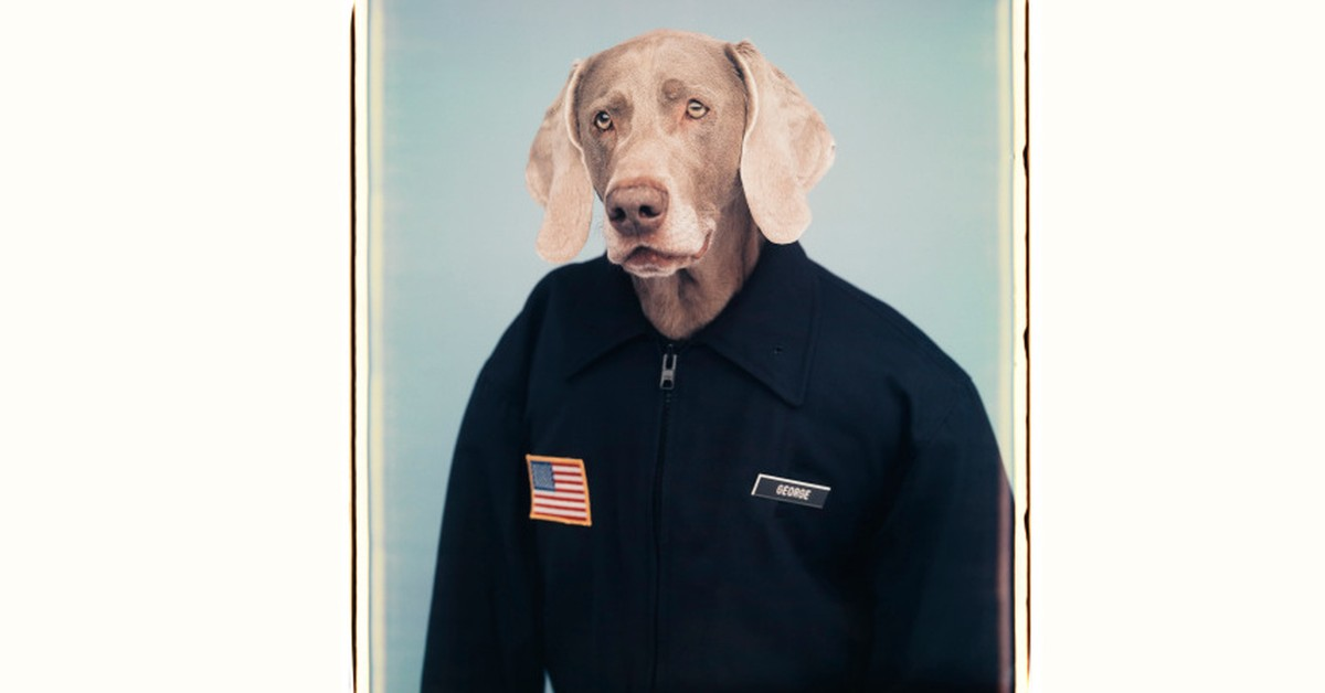 Before Dogs of Instagram There Was William Wegman
