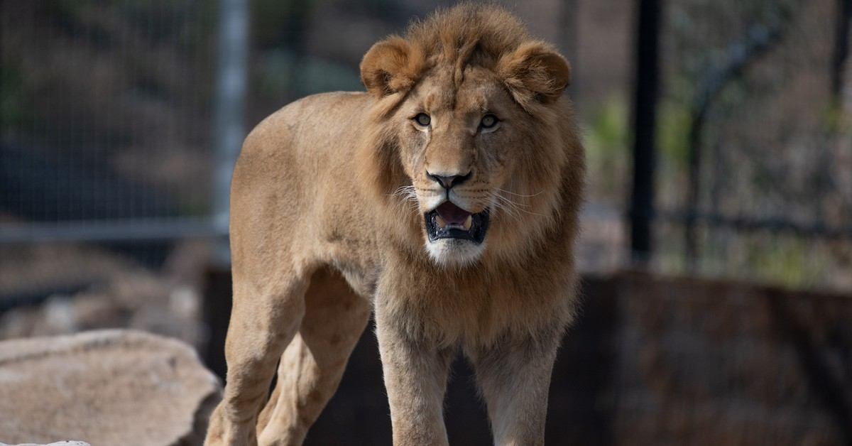 The First Animals Have Arrived at Sydney Zoo, the City's